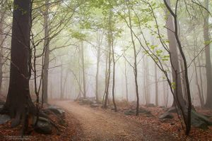 A Walk In The Foggy Forest by DominikaAniola