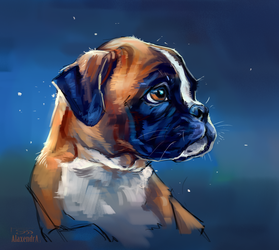 Boxer's puppy by AlaxendrA