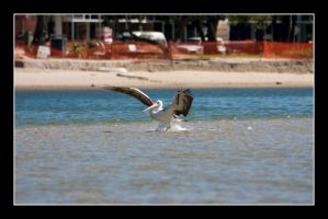 Oz06 - 07 - Pelican Landing by Keith-Killer