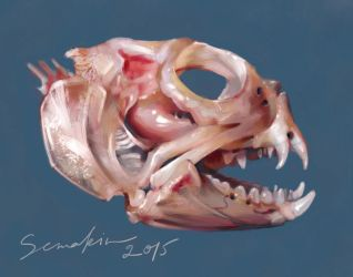 Fish Scull by lapis6