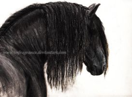 friesian horse by imFragrance