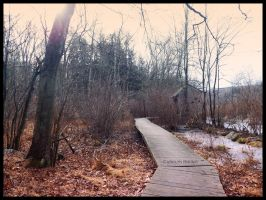 Teatown Reservation #4. by Sparkle-Photography