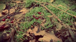 Red Berries in the Forest by Zorodora
