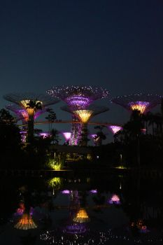 Night Garden by The Bay by chocopple
