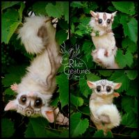 Sugar Glider Twins Closeup by RikerCreatures