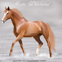 Arctic Whirlwind by wsl30horselover10
