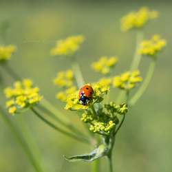 Ladybird's Paradise by DorotejaC