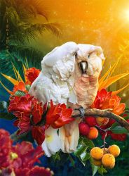 Parrot's tenderness by IgnisFatuusII