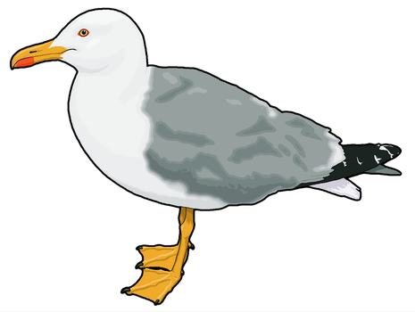 Seagull Clipart by MisterBug