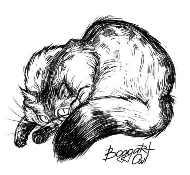My cat 1 by BoggartOwl