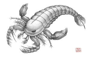 Megalograptus Eurypterid by aaronjohngregory