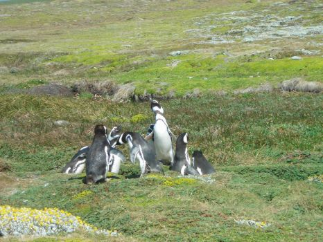 Penguins by sapphi20