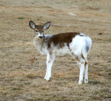 A Deer of a Different Colour by tidesend