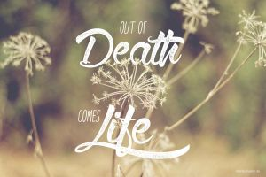 Free Walpaper - Life from Death by Emberblue