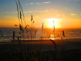 Grassy Sunset on Beach by Sing-Down-The-Moon