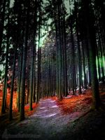 To have a Forest Dream by Andenne