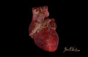 Human Heart 3D Model by JWraith