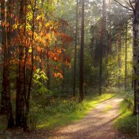 Forest trail by michaelosipov
