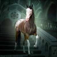 HEE Horse Avatar - Time Lord by Art-Equine