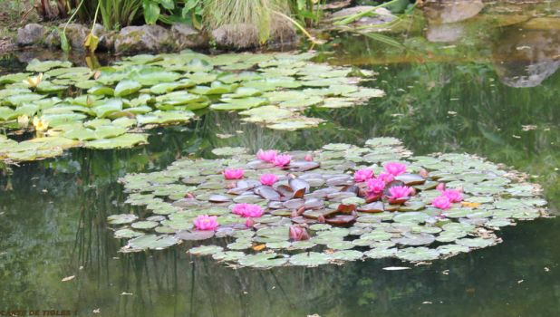 MORE FAIRY'S WATERLILIES... by Tigles1Artistry