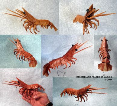 Shrimp Origami Image Collections Instructions Easy For Kids