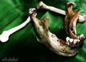 The Human Mandible. by exileinblonde