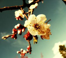Spring by ascs