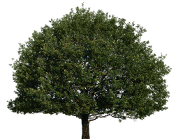 Tree 51 png by gd08