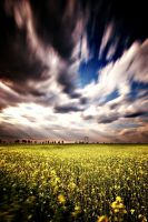 Fields by yyan