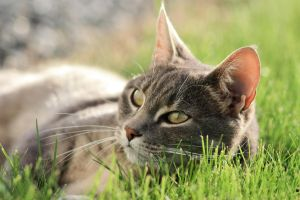 Cat in the grass by estrar