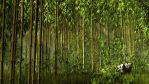 Bamboo Forest by xmas-kitty
