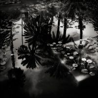 Oasis Dream by zepiaf
