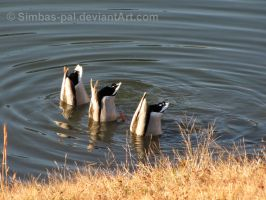 Synchronized Diving by Simbas-pal