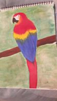 Macaw  by TaitGallery