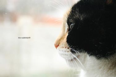 cats' profile by the-wabbit