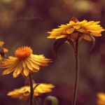 summer touch. by Eunelia