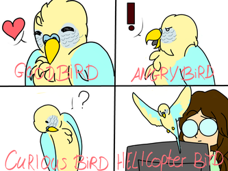 Bird Emotions by greentigergirl