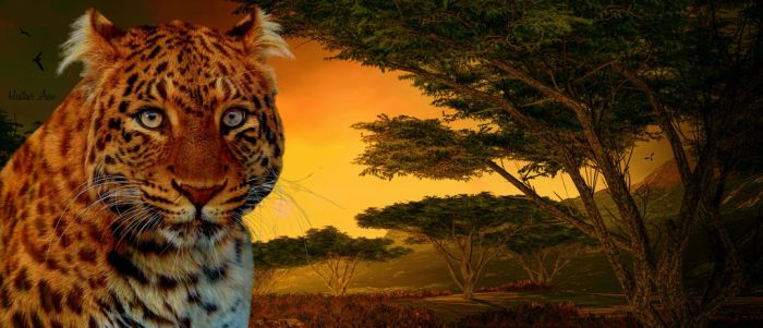 Beauty of Africa Wallpaper by XHeather-AnnX