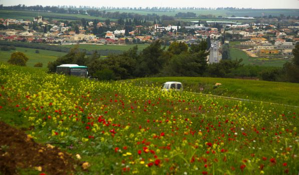 Fields of poppies by ShlomitMessica