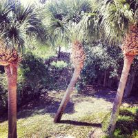 The Palms by WadeCreativeSuite