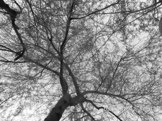 trees by Momoiichi