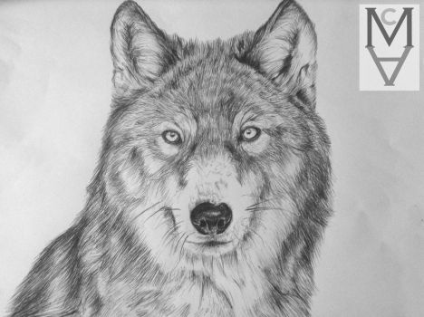 Wolf by sarah-mca-art