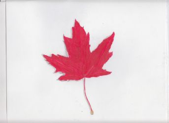 maple leaf by thefabulousduck