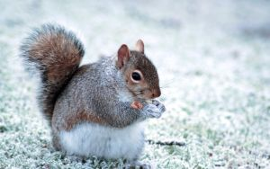 Chubby Squirrel by peehs