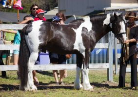 STOCK - Canungra Show 2012 149 by fillyrox