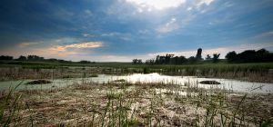 Iowa Marshes by realmofheaven