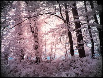 Tender Leaves infrared by MichiLauke