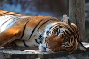Peaceable kingdom by NB-Photo