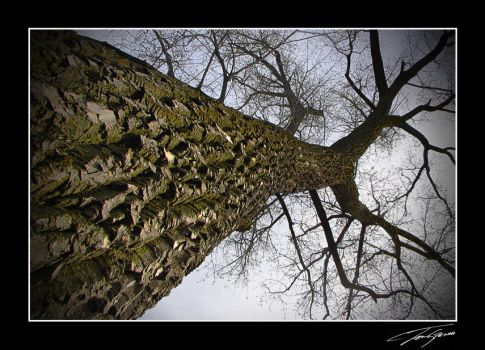 Looking up the tree by electricjonny