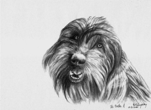 Dog by Arpmadore